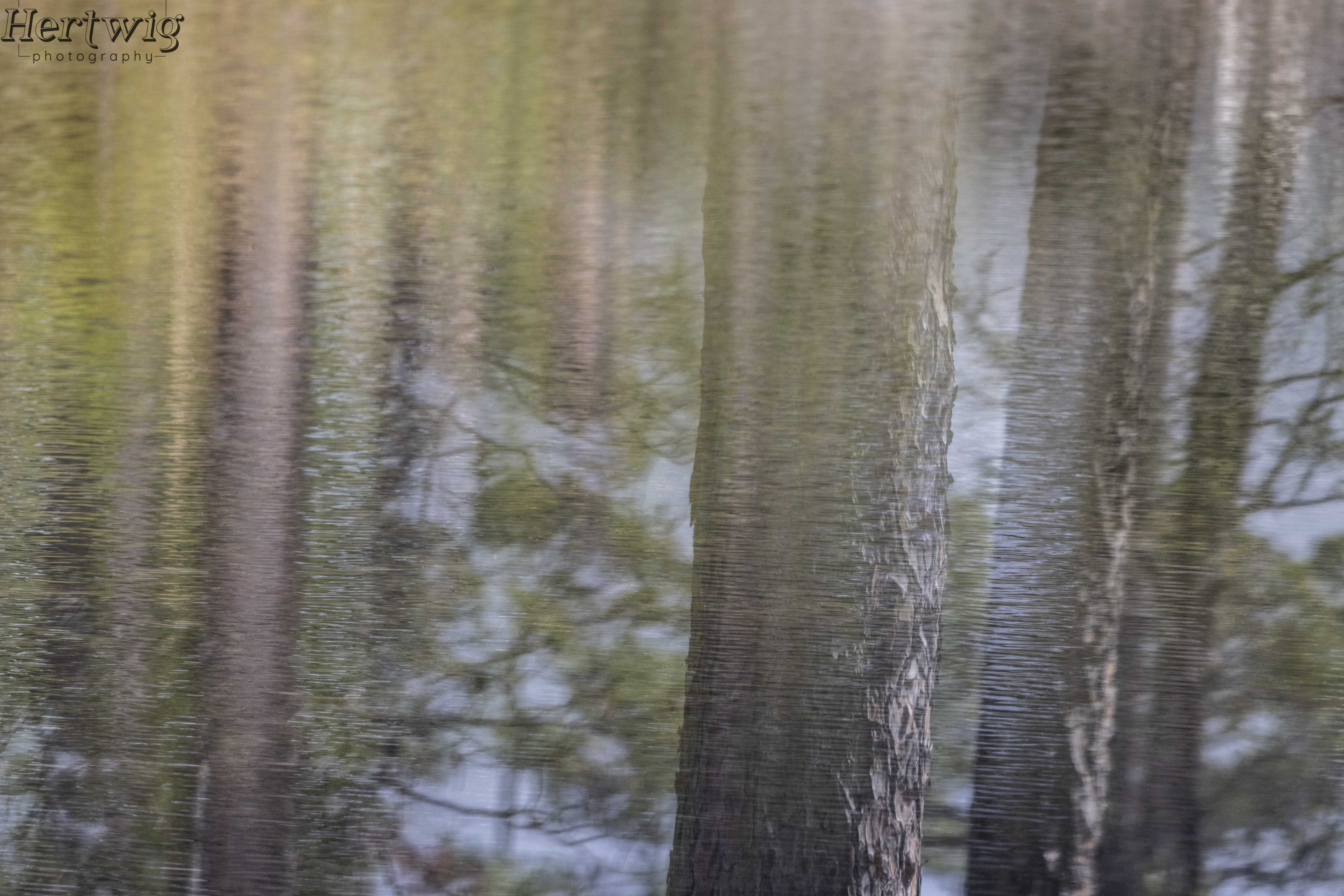 Pining for Reflections
